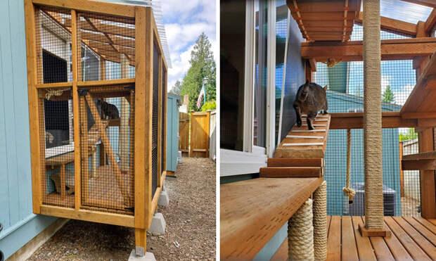 Что такое икак выглядит котио, игровая площадка для кошек насвежем воздухе