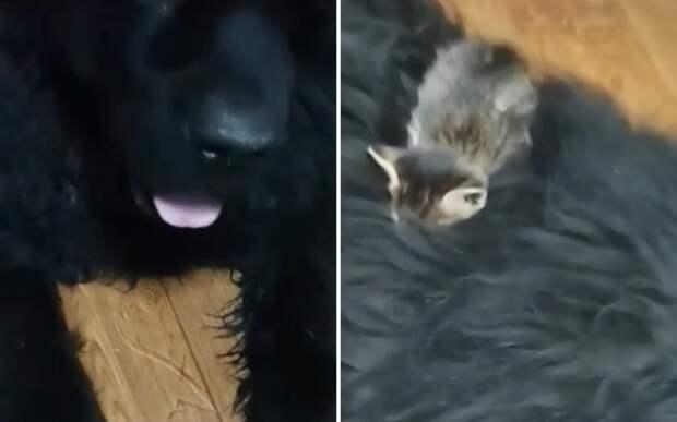 «Присосался»: собака принесла домой самого милого на свете «клеща»