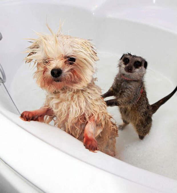 17 забавных зверушек, которых заставили принять ванну