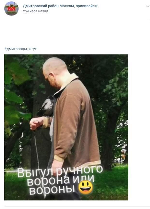 Фото дня: в парке «Ангарские пруды» заметили ручного ворона