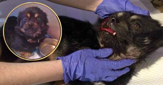 «Так бывает. Однажды тебе привозят ледяное существо в крови в 3 часа утра…» История ночного спасения сбитого щенка!