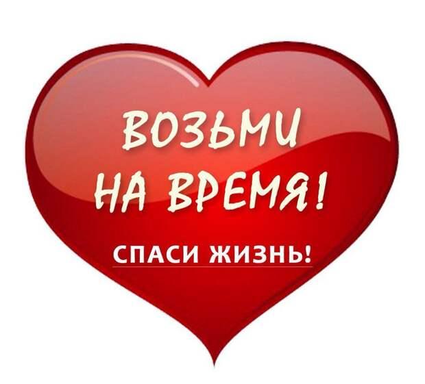Они погибают на холоде, а могли бы дарить дому любовь и уют... Помогите, пожалуйста!!!