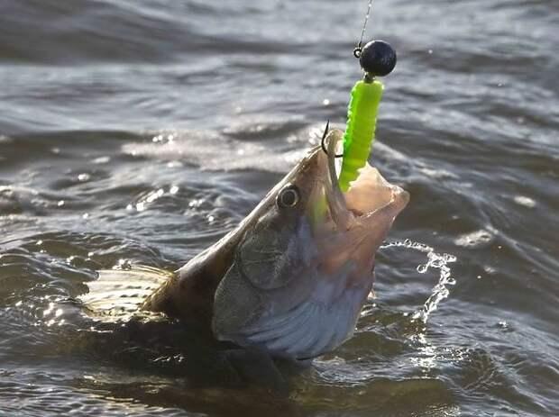 Жареная рыба с топинамбуром