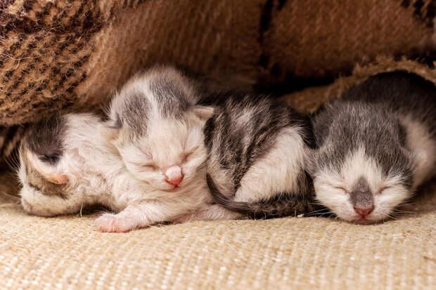 Пользователей умилил кот, который принёс котят под одеяло хозяйке