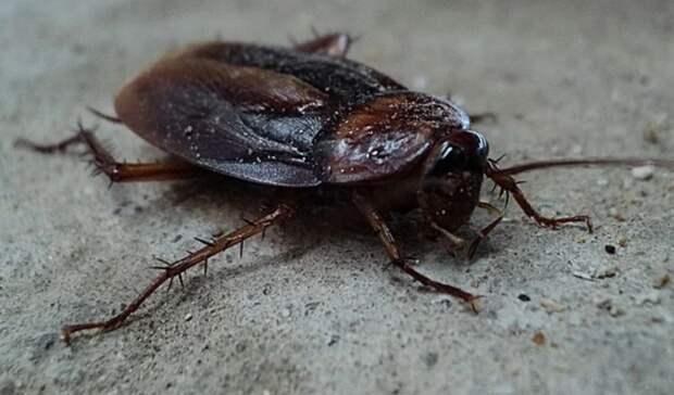 Сотни тараканов вдоме ипризывник-лунатик. Итоги дня вСвердловской области