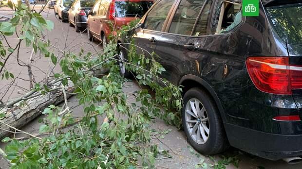 Ураган в Москве повалил 15 деревьев и повредил 5 машин