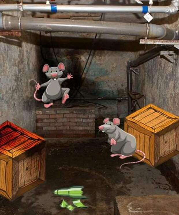 Крысиная мечта! (2 фото)