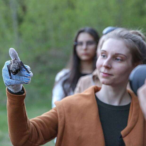 В Москве выпустили на свободу 20 летучих мышей