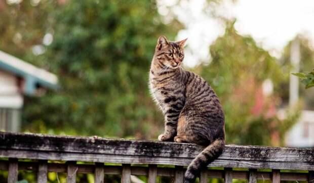 Госдума приняла во втором чтении проект о запрете изъятия домашних животных за долги