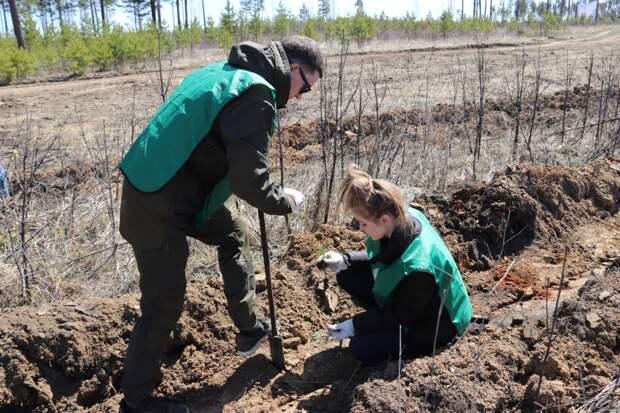 Сад памяти высадили на 35 км Александровского тракта