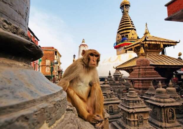 Непал – родина Будды и один из хранителей Эвереста