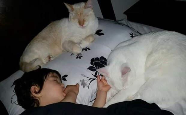 Как рассказывают родители, их дочь умеет найти подход к питомцам девочка, дружба, кот