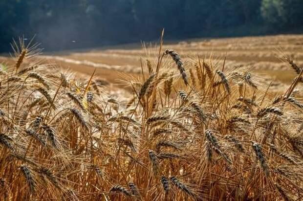 Во Владимирской области яровыми культурами засеяли 3678 гектаров земли