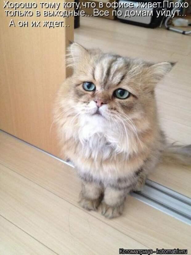 Новая котоматрица (26 фото)