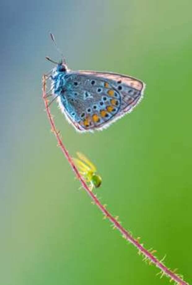 Макросъемка: бабочки и другие насекомые