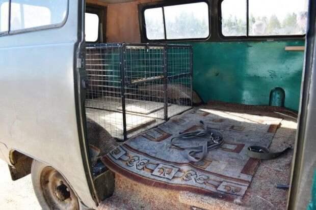 В Ижме отловом бродячих собак занимается ветеринарный врач