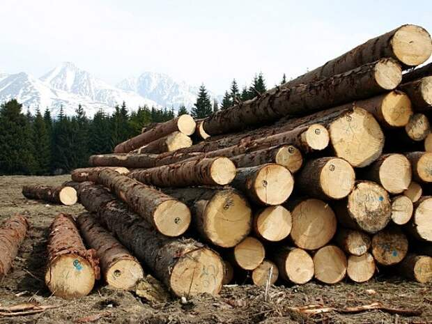 В России вводятся пошлины на вывоз отдельных видов лесоматериалов