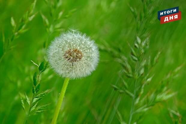 Итоги дня: активность клещей в Удмуртии и старт сезона в Летнем саду Ижевска