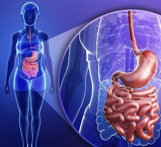 Генеральная уборка тонкого кишечника