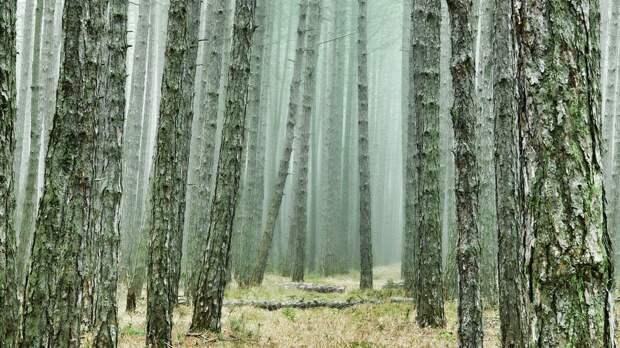 Ученые из Челябинска создали модель искусственного дерева для очищения воздуха