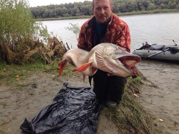 Новосибирский рыбак поймал щуку длиной с человека  история, новосибирск, рыбак, щука