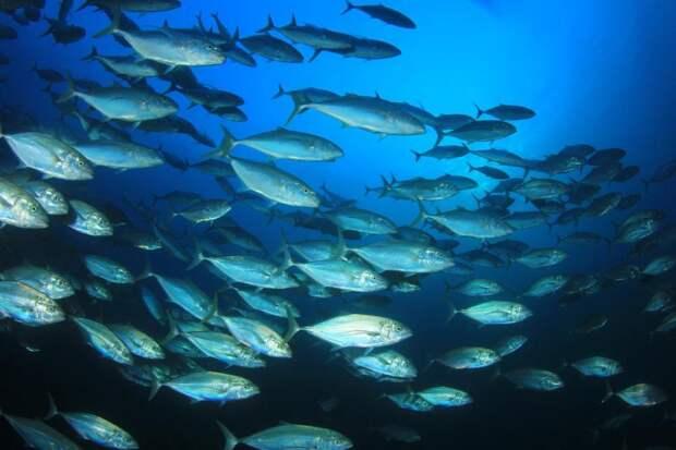 Ученые выяснили, какие рыбы переживут климатические изменения: Новости ➕1, 17.05.2021