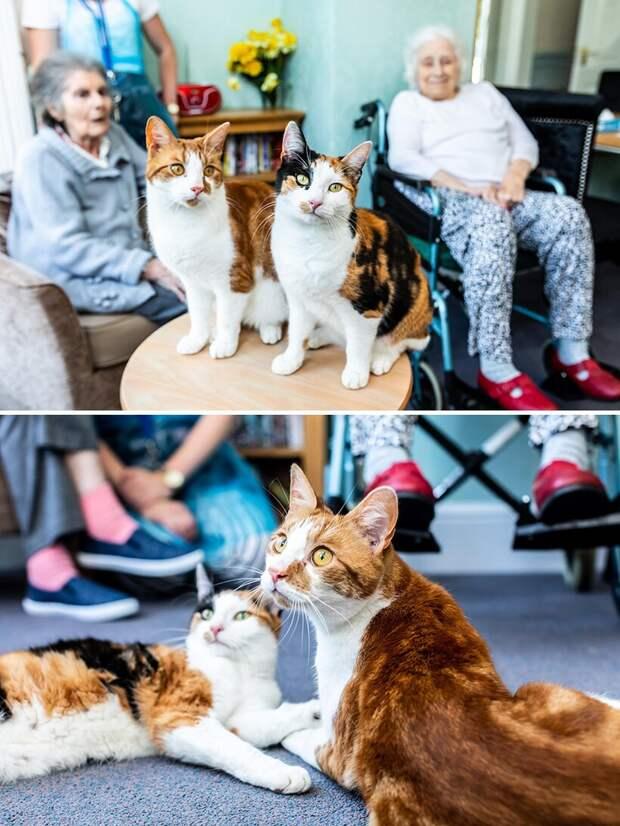 10 кошек, которые спасли своих хозяев и помогли им справиться с трудностями
