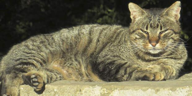 Зоопсихолог назвал пять психотипов кошек: какой из них у вашего питомца?