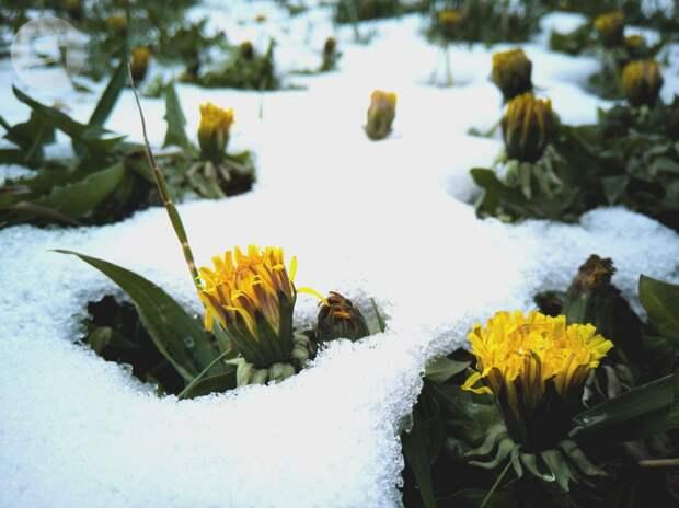 Дожди с мокрым снегом ждут жителей Удмуртии в четверг