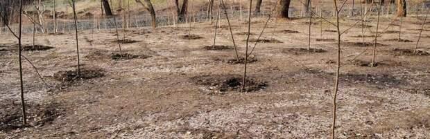 Интерактивную карту для контроля за посажеными деревьями запустят в Казахстане с сентября