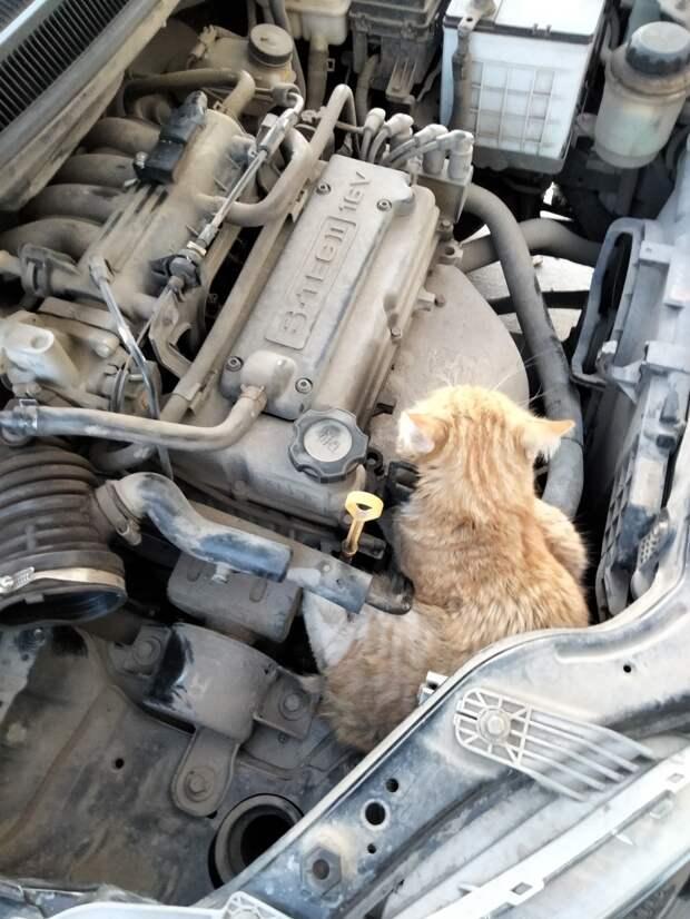 Кот в двигателе автомобиля