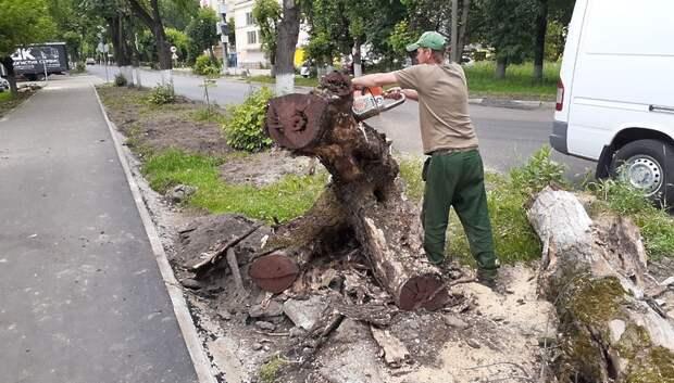 Сухостойные деревья начали спиливать на Заводской улице Подольска