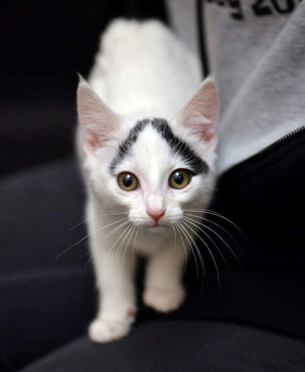 Природа рисует: самые удивительные кошачьи окрасы животные, забавно, коты, кошки, неожиданно, окрас, окрас кошек, фото
