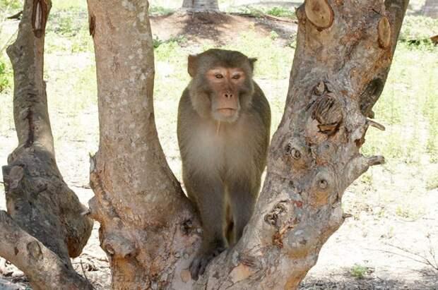 Добро пожаловать на остров обезьян