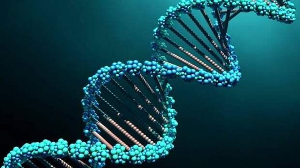 Что такое ДНК простыми словами