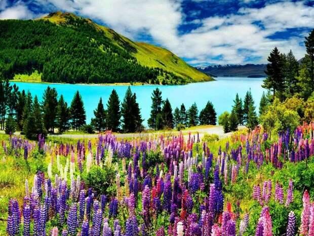 beautiful_lake_tekapo.jpg