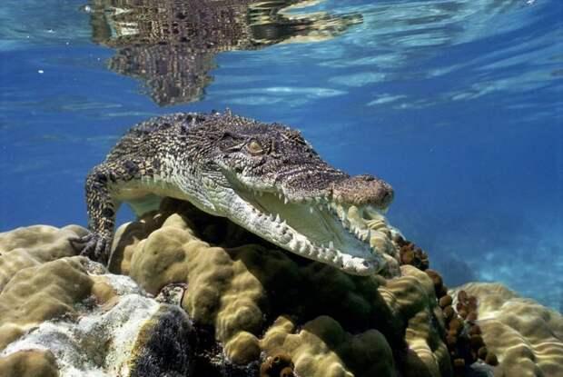 Смертельно опасные существа на нашей планете