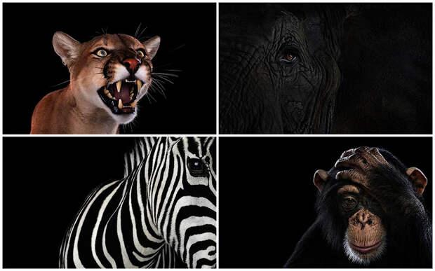 Портреты животных крупным планом
