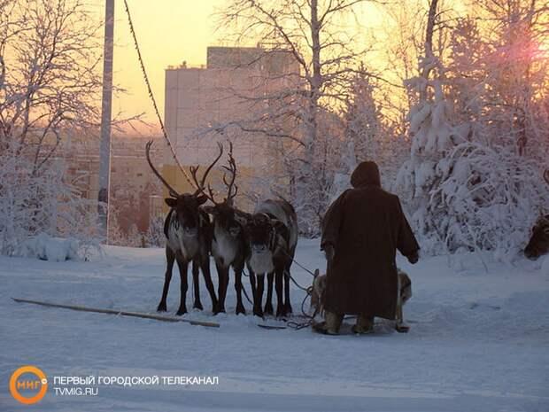 Ямальцы смогут получить гранты на реализацию проектов в сфере внутреннего и въездного туризма