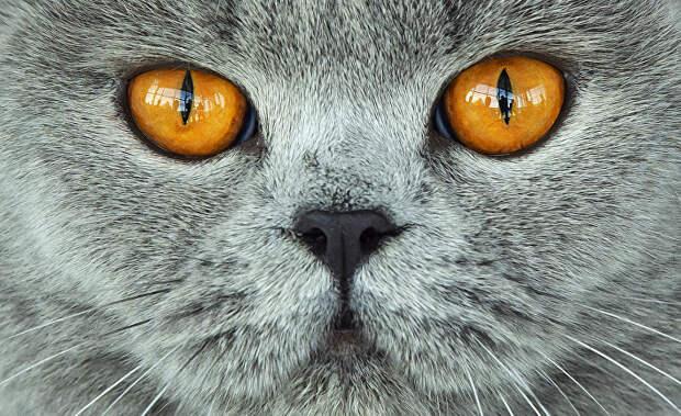 """Картинки по запросу """"кошка"""""""