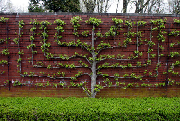 Грамотное озеленение участка.   Фото: Picssr.