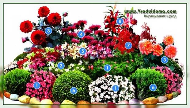 Цветник крансого цвета и растения для него