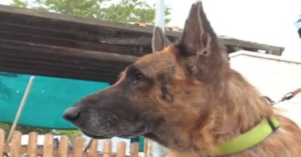 «Vivo – значит «живой»: история брошенного пса, который был тяжело болен, но не сдался…