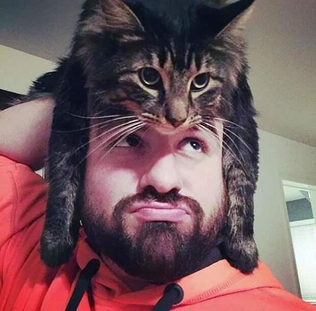 1. Популярность, животные, идея, интернет, кот, фото, шапка