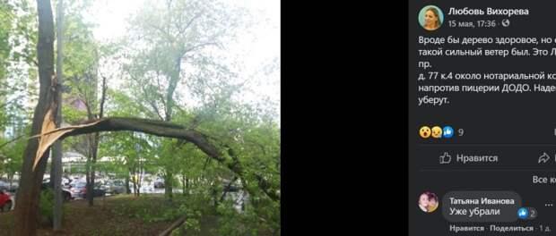 Из-за прошедшего урагана на Ленинградке упало дерево