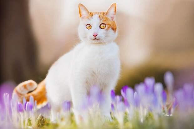 Кажется весна приближается