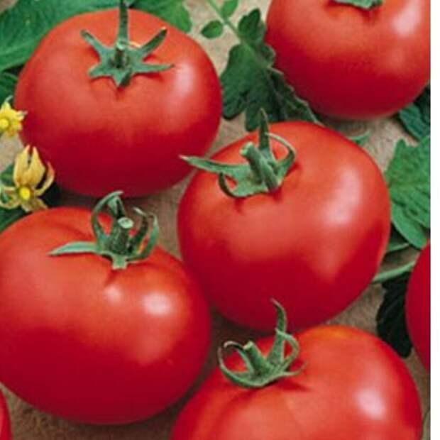 Правильно выбираем сорта томатов к рассаде.