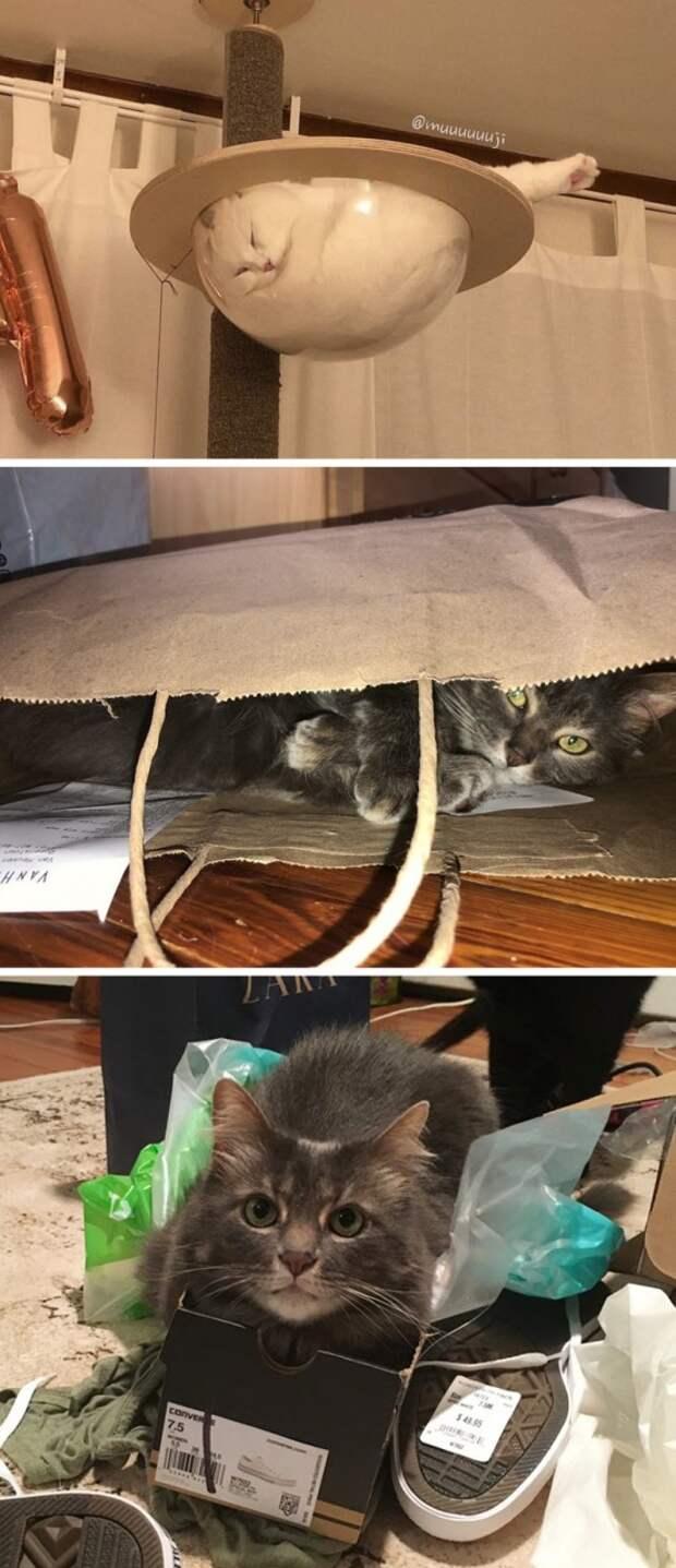 20+ правдивых фото, которые демонстрируют всю суть жизни с котом
