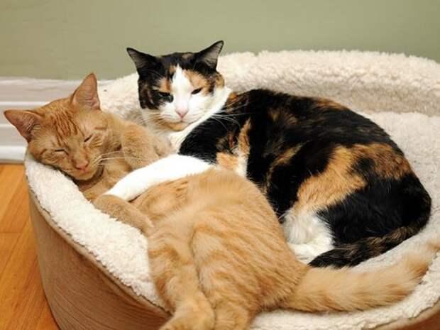Коты и кошки – позитивчика немножко (23 фото)