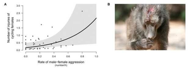 Биологи сделали сенсационное заявление о павианах